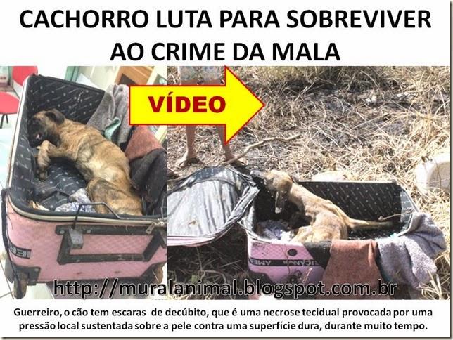 CACHORRO LUTA PARA SOBREVIVER AO CRIME DA MALA