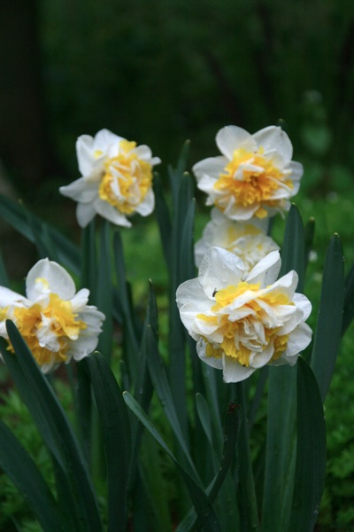 Daffs2