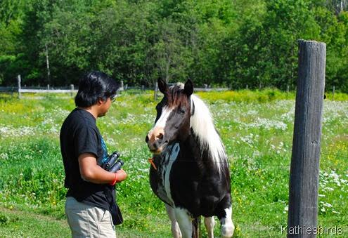 2. micheal n horse-kab