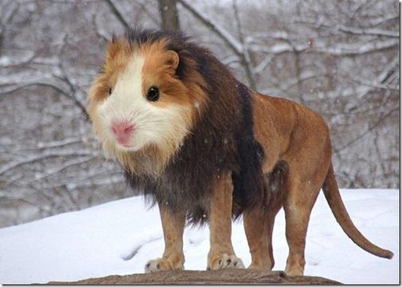 hybrid-animals-photoshop-9