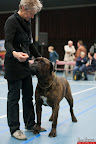 20130510-Bullmastiff-Worldcup-0974.jpg