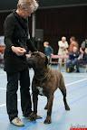 20130510-Bullmastiff-Worldcup-0974.jpg