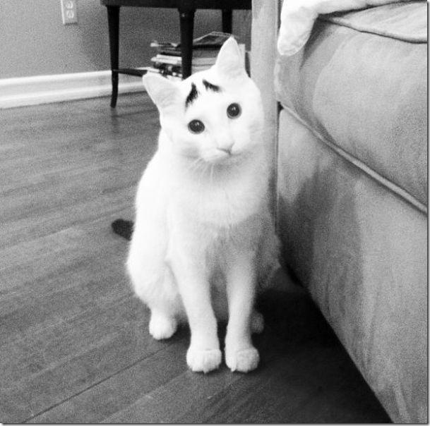 white-cat-eyebrows-1