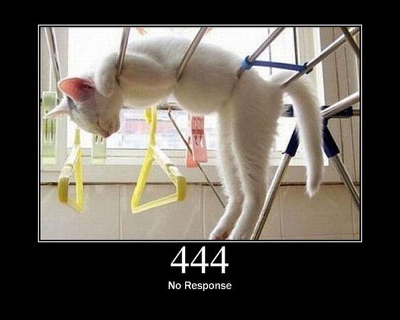 HTTP-Status-Cats-22
