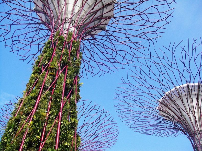 supertrees-singapore-11