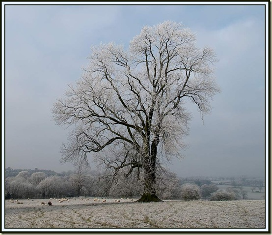 Hoar frost in Sandon Park