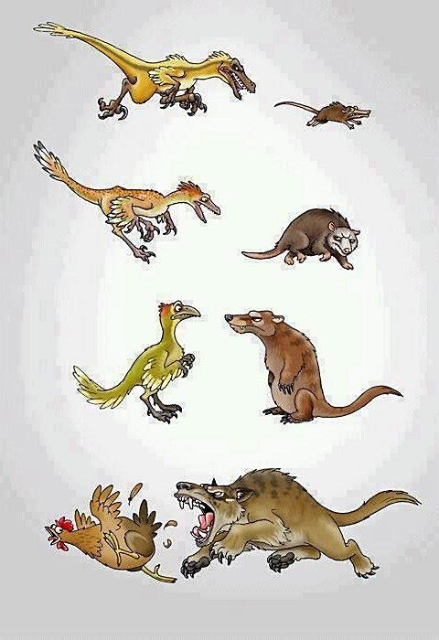 Эволюционный матч-реванш - наш!