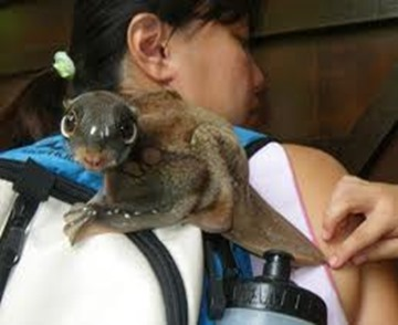 Amazing Pictures of Animals, photo, Nature, exotic, funny, incredibel, Zoo, Sunda flying lemur (Galeopterus variegatus), ALex (2)