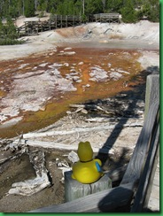 Norris Geyser Basin (232)