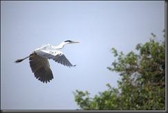 LL - bird in flight 2