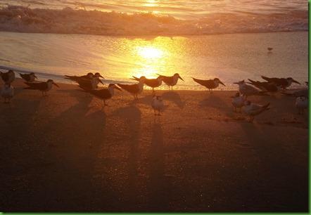 Thursday Sunrise51
