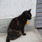 20120617_猫ギャラリー