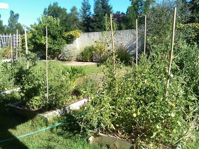 2014 Garden So Far…