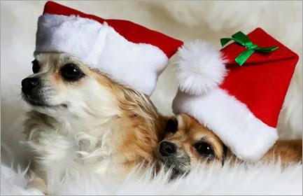 Cute-Christmas-Animals-35