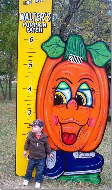 pumpkin patch 118