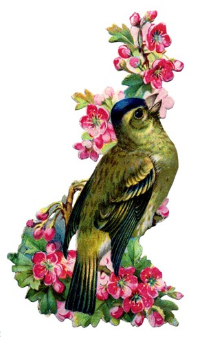 birds and flowers vintage image graphicsfairy2b