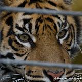 Heidelberger-Zoo (42 von 49).jpg