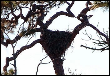 03g2 - Eagle Walk - Eagle Nest cropped nest