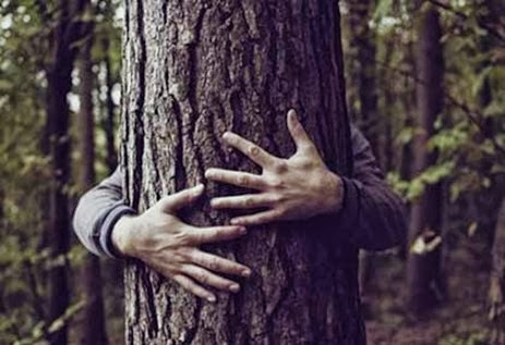 435_albero_abbracciato_420