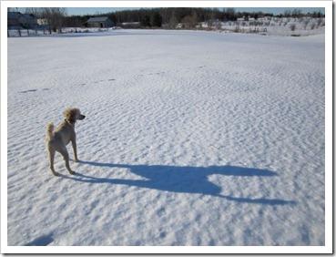 20120208_snow_017