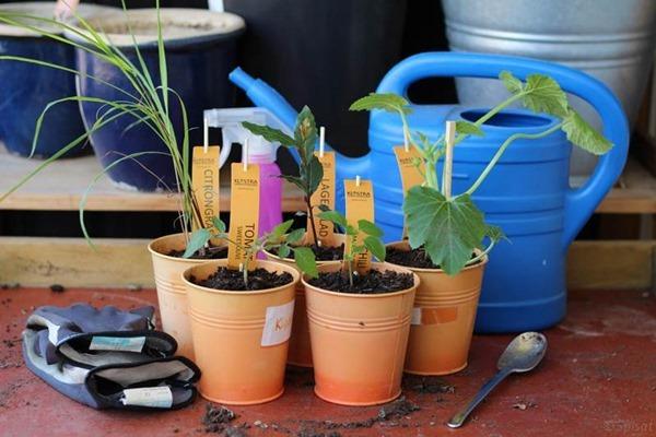 Nya plantor från Klostra