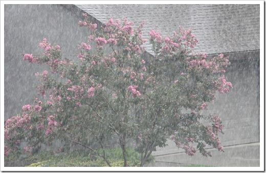 111006_rain_crepemyrtle