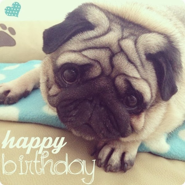lunathepug_luna_pug_blogger_dog_birthday_girl_cute