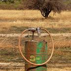 Die Tankstelle von Helikopter Horizons © Foto: Ulrike Pârvu | Outback Africa Erlebnisreisen