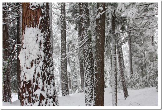 121223_snow_032
