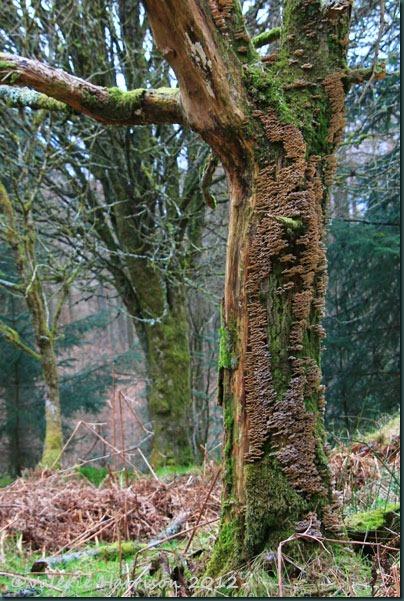 24-lichen-tree