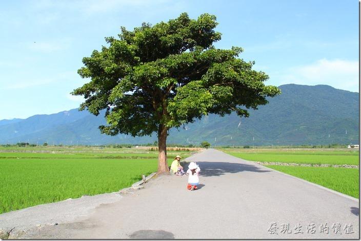 從大相框的地方的地方往西行約1.5公里,就可以到達金城武乘涼的那顆大樹,記得是從東邊數來的第三顆大樹,也是最茂盛的一棵樹,而且是很多人拍照的一棵樹,拍照時還有小朋友一直在問「這棵樹有沒有什麼?為什麼每個人都要跟這棵樹合照?」。這就是台灣文化,因為這棵樹金城武做在下面乘過涼,現在被稱為「金城武樹」。
