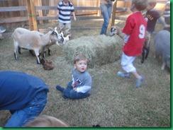 ty in farm