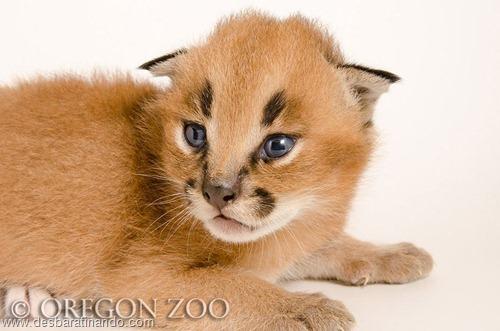 filhotes recem nascidos zoo zoologico desbaratinando animais lindos fofos  (11)