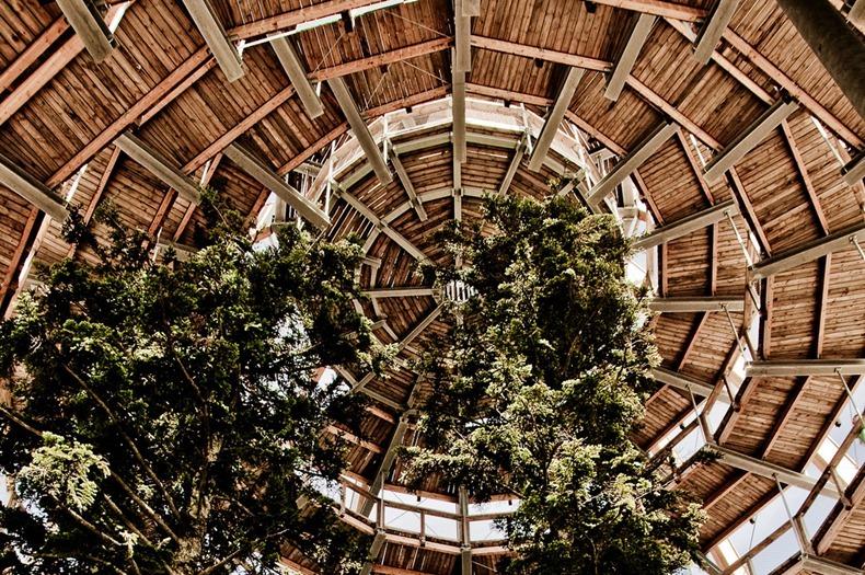 bavaria-treetop-walk-4