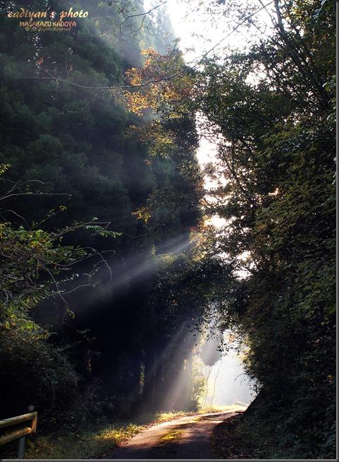 E-PL1_2012-11-08_010