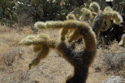 Arizona_2011_306.jpg