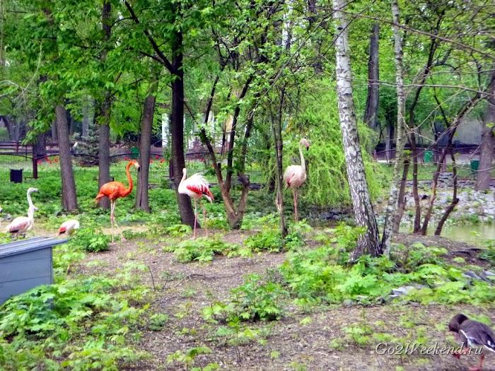 Kiev_Zoo_8.jpg