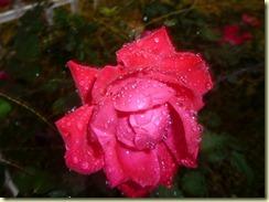 Another Rainy Day beauty