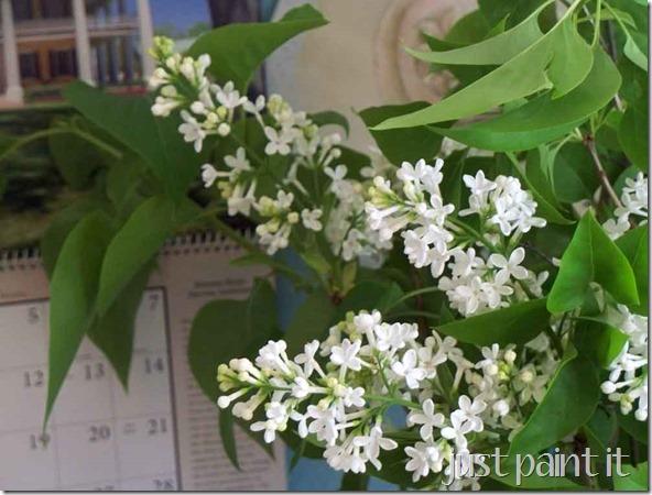 white-lilacs-1