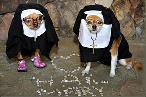perro-disfraz-monja