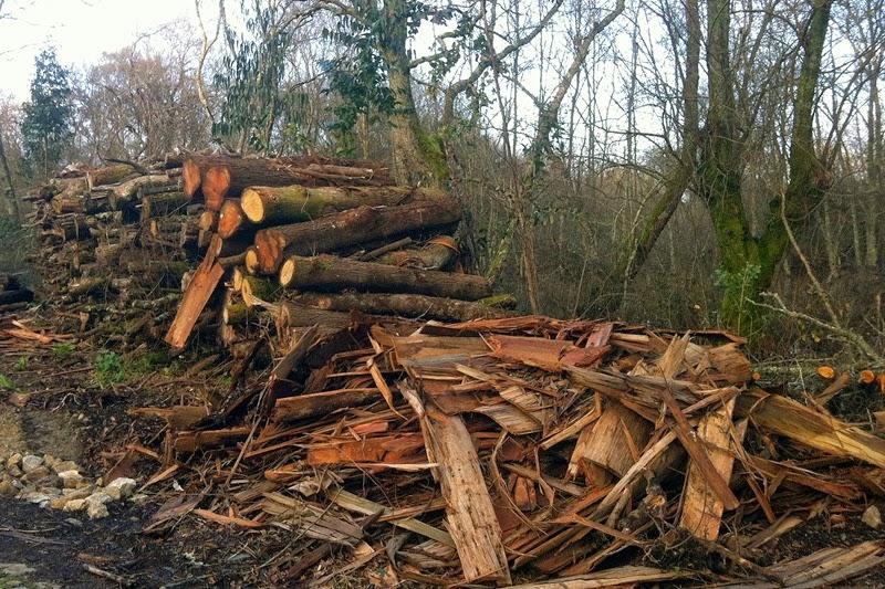 abate de árvores