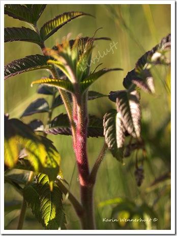 PåVäxtnivåSGN
