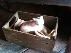a happy cat in the hay loft