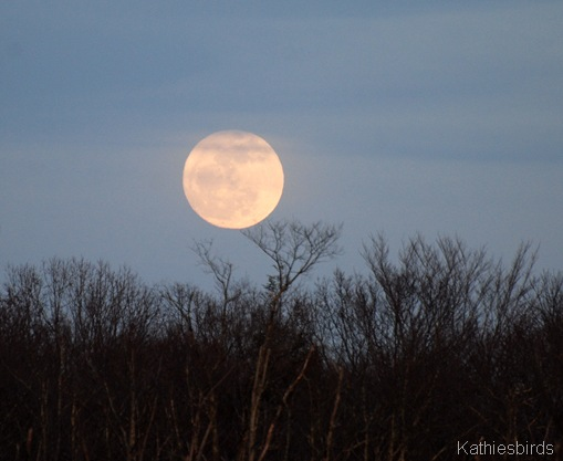 3. Moonrise533-kab