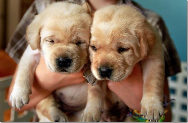 funny-animals-cute-4