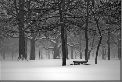queens-park_snow_bench_trees_01