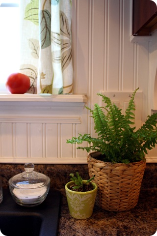 fern in kitchen ikea pot