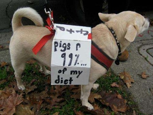 cute-pets-at-occupy-wall-street-18