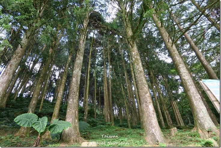 三峽熊空茶園 (23)