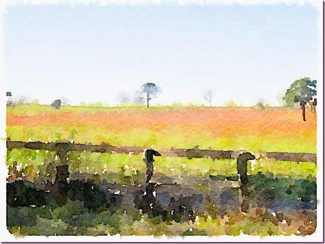 redgrass
